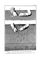 Ouvriers velus bas cintres